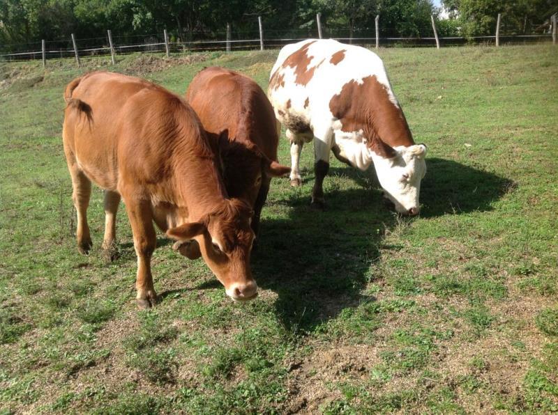 Agritusmo fattoria didattica con animali in casentino arezzo for Grandi planimetrie della fattoria
